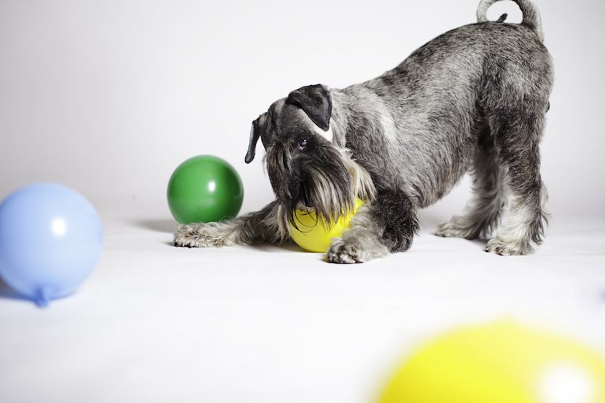dog playing with ball in infinity cove studio